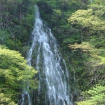 【5月上旬】一年に1度しか見れないという、2人が幸せになれると噂の幻の樽滝!