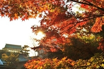 秋の朝 日本丸
