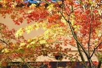 路地の紅葉
