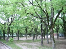 広島中央公園