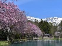 春のニレ池