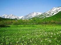 春の栂池高原