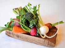 地元契約農家からの新鮮野菜