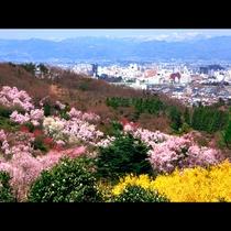 【花見山】