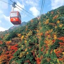 【秋の御在所岳】紅葉の名所として有名。美しく色づいた山並みをご覧いただけます