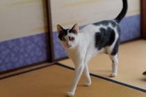 猫スタッフ ハナ