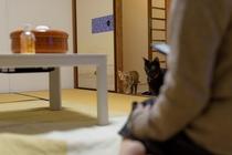 猫スタッフ