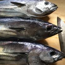 *[お料理一例]黒潮の恩恵♪近海で獲れた鮮度抜群な旬の魚ををどうぞ!