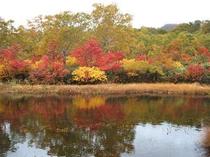 錦色織りなすニセコの紅葉