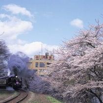 桜色に染まる季節と佐取館