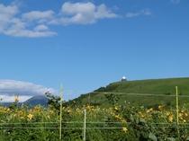 【夏】7月中旬 車山のニッコウキスゲ 眺望もGOODです