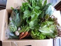 後輩が作っている野菜たち(*^_^*)