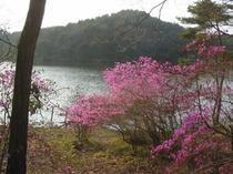 ツツジ咲く湖