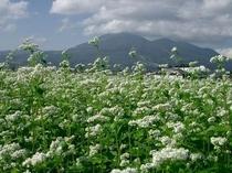 磐梯山とそば畑2
