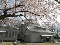 天鏡閣の桜・1