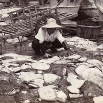 昭和30年代あんこう仕入風景