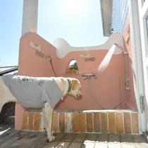グレート・デーンまで洗える大型ドックシャワー♪