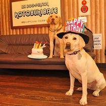 ワンちゃんの誕生日をみんなでお祝い!