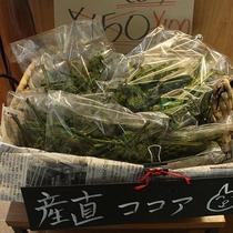お土産用/山菜