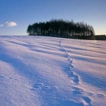 冬の小岩井農場