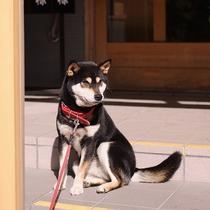 愛犬ココア