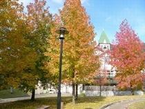 紅葉の美しいホテル周り