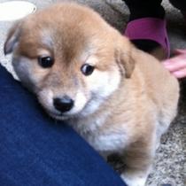 まだまだ仔犬マドレーヌ(2012年1月)