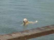 泳ぐの好き♪