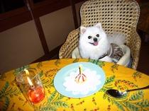 私もお誕生月のお泊りだワン♪おめでとう!