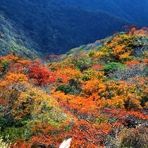 【秋 -紅葉-】