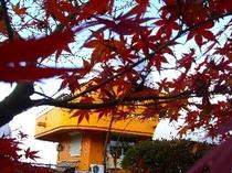 紅葉と日原天文台