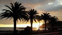 椰子の木と朝日