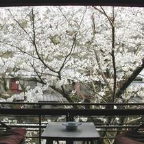 【桜/3〜4月】