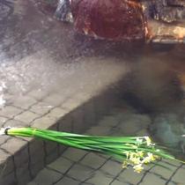【すいせん風呂】冬期(12月中旬~2月中旬)は、水仙風呂をご用意。(露地物のため期間変更の場合あり)