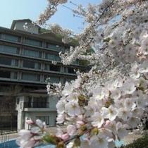 桜景色・東館2