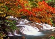 紅葉の横谷峡