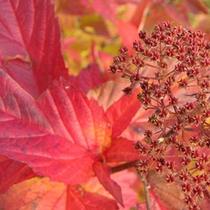 *【秋】見事に色付く木々の葉っぱ。志賀高原の紅葉は見ごたえたっぷり!