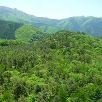 *【春】坊平橋から眺める新緑。志賀高原の春は豊かな緑に包まれて。