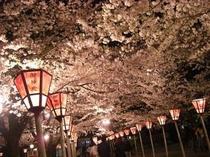 ■三嶋大社夜桜
