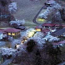 桜のライトアップでさらに幻想的に浮かび上がる1軒宿