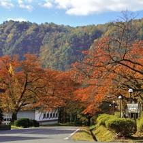 秋には紅葉で赤く色付く木々のトンネルを散策