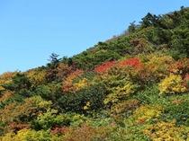 地蔵岳の紅葉