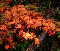 秋の蔵王2