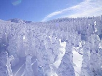 冬の蔵王2