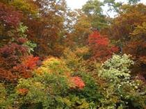 秋の蔵王4
