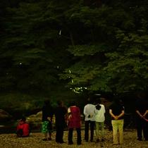 6月下旬~7月上旬 ホタル 其の二 ホタルバス5分!名栗川河原でのホタル観賞☆
