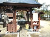 豊玉姫神社の白なまず様