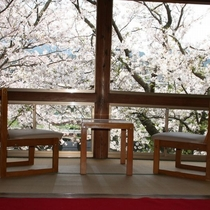 桜の咲く季節、葵の間は花見処として開放。夜はライトアップ。