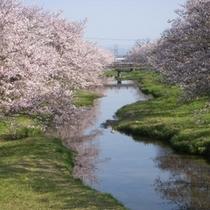 懐かしい桜と日本の風景
