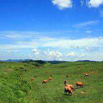 <夏・あか牛と草原>雄大な景色に感動♪